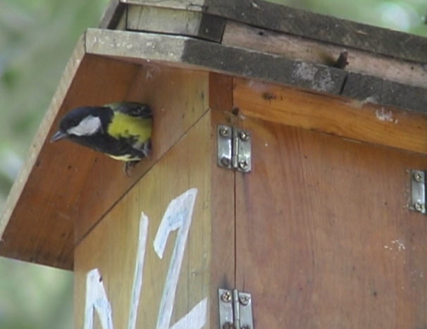 Nest Box Brooding Full Record 1